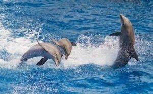 В Сочи бесплатно обучают, как помочь дельфинам