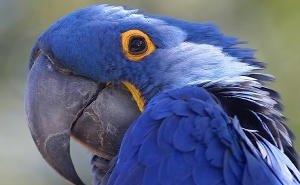 В Геленджике у мужчины изъяли 15 измученных животных и птиц