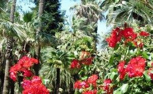 В Сочи появится «музей под открытым небом» из реликтовых растений