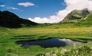 В Кавказском биосферном заповеднике туристы вытоптали уникальные растения