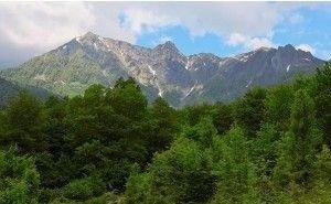 Суд обязал исключить земли лесного фонда из Генплана Сочи