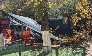 Упавшее в детсаду дерево убило ребёнка из ясельной группы