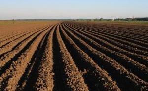 Кубанских аграриев заставят удобрять почву
