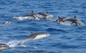 Дельфинов в Чёрном море посчитают с воздуха