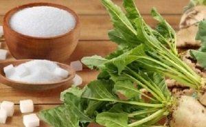 Аграриев Кубани просят сократить посевы сахарной свеклы на 15-20%