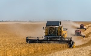 На Кубани падают объёмы производства сельхозпродукции