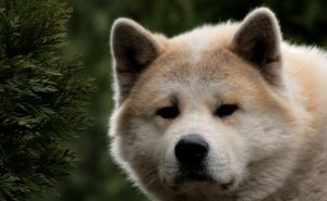 В Новороссийске не могут найти хозяина породистой собаки, разорвавшей лицо ребёнку