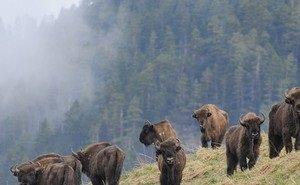 В Сочи туристы смогут пройти «Тропой зубра»