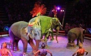 Краснодарский цирк отремонтируют за 2,25 млрд рублей