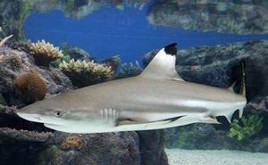 «Океанариум» Геленджика продаёт акулу