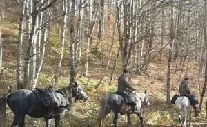На Кубани круглосуточно патрулируют въезды в леса
