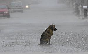Власти Краснодара планируют строить приют для животных