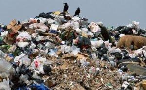 Мэр Краснодара обещал уволить чиновников, замешанных в «мусорном» скандале