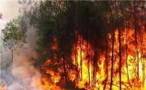 На Кубани после лесных пожаров возбуждено 5 уголовных дел