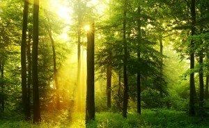 Кубани на сохранение лесов выделили 102 млн рублей