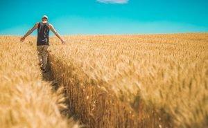 Путин поддержал инициативу губернатора Кубани о выделении земли фермерам без торгов