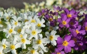 Краснокнижные растения в Сочи оказались под угрозой исчезновения