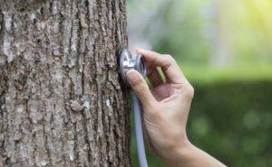Все деревья в Краснодаре пройдут «томографию»