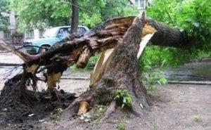 На Кубани судят сироту за уборку школьного двора от упавших деревьев