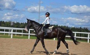 На Кубани разработают специальную программу для развития коневодства