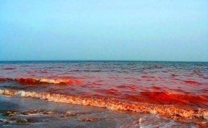 Чёрное море в Новороссийске окрасилось в кровавый цвет