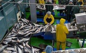 На Кубани появится завод по переработке рыбы