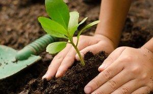 Аграриев Кубани обяжут заботиться о плодородии почв