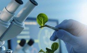 Научному фонду Кубани выделяют 70 млн рублей