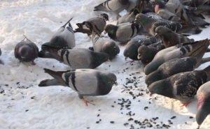 На Кубани зафиксирована массовая гибель птиц
