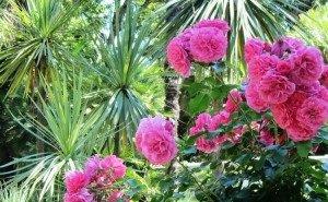 Растения сочинского «Дендрария» проходят проверку на морозостойкость