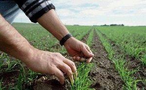 Растениеводов Кубани поддержат миллиардами
