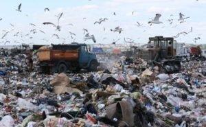 Мусорный полигон в Белореченске закрыт по решению суда