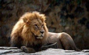 В сафари-парке Геленджика лев набросился на посетителя