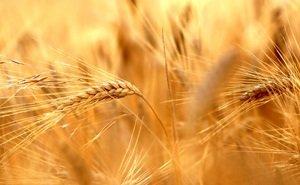 На агрострахование Кубань в 2020 году выделяет больше 330 млн рублей