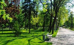 В Краснодаре высадят 20 тысяч деревьев
