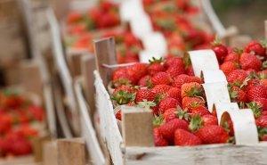 Кубань вошла в число лидеров по урожаю ягод