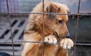 Приют «Краснодог» оказался на грани закрытия