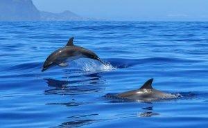 На Кубани с начала года нашли более 60 мёртвых дельфинов