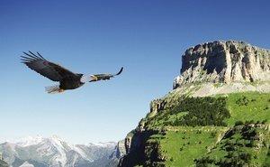В Сочи запускается новый экологический проект по изучению птиц