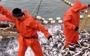 На Кубани упали объёмы вылова рыбы