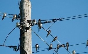 В Сочи и Туапсе устанавливают отпугиватели птиц