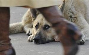 В отсутствии денег на бездомных животных чиновники Сочи винят коронавирус