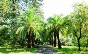 В Сочи ищут способ спасения пальм от гусениц-убийц