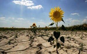 На Кубани готовятся к небывалой засухе