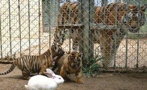 В зоопарках и океанариумах Кубани выявлены нарушения
