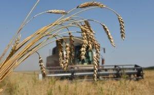 Аграрии Кубани, несмотря на гибель урожая, обещают обеспечить страну продовольствием