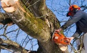 Краснодарцы могут сообщить о вырубке деревьев, не выходя из дома