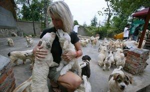 На Кубани работа приютов для животных урегулирована на законодательном уровне