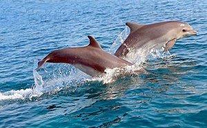 Названа причина массовой гибели дельфинов в Чёрном море