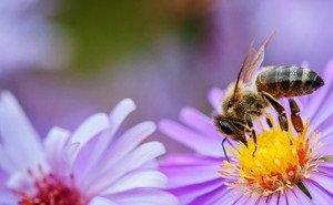 В Сочи разводят «суперпчёл»